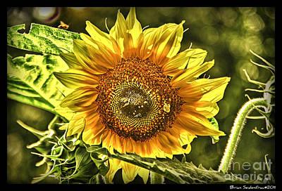 Sunflower Photograph - Sunflower by Brian  Seidenfrau