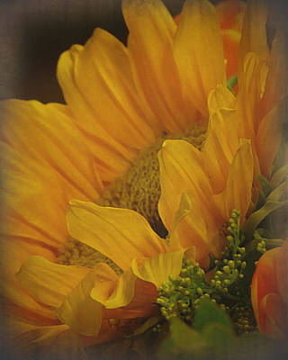 Mission Ventures Photograph - Sunflower by Terry Eve Tanner
