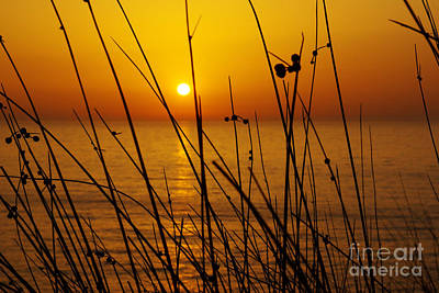 Sunset Print by Carlos Caetano
