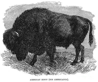 The Buffalo Print by Granger