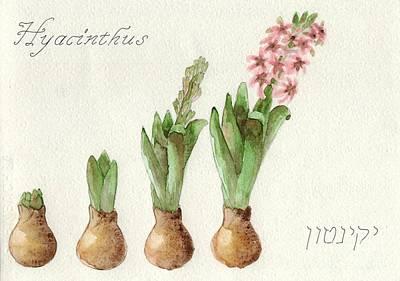 Spring Bulbs Painting - The Growth Of A Hyacinth by Annemeet Hasidi- van der Leij