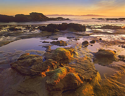 Tidepools Exposed At Low Tide Botanical Print by Tim Fitzharris