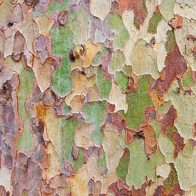 Mosaic Photograph - Tree Bark by Tom Gowanlock
