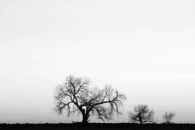Black Photograph - Tree Harmony Black And White by James BO  Insogna