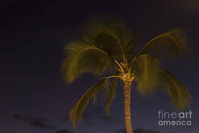 Tropical Paradise Print by Sharon Mau