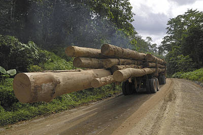 Danum Valley Conservation Area Photograph - Truck With Timber From A Logging Area by Thomas Marent