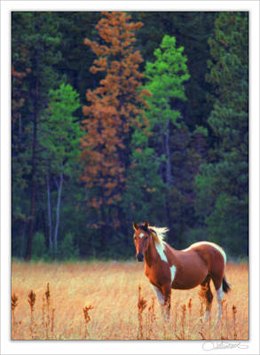 Horse Photograph - Ungulate In Field by Lar Matre