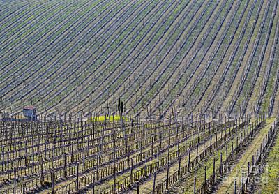 Big Wine Photograph - Vineyard by Mats Silvan