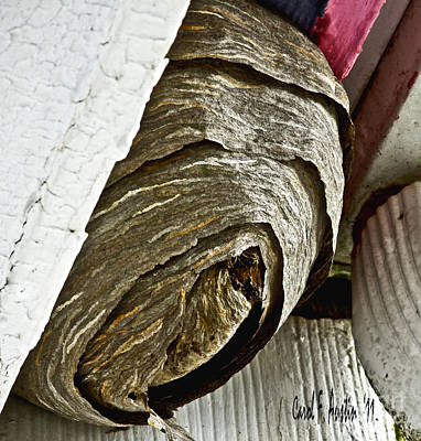 Wasp.insect Digital Art - What's The Buzz - Wasp Nest by Carol F Austin