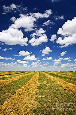 Wheat Farm Field At Harvest In Saskatchewan Print by Elena Elisseeva