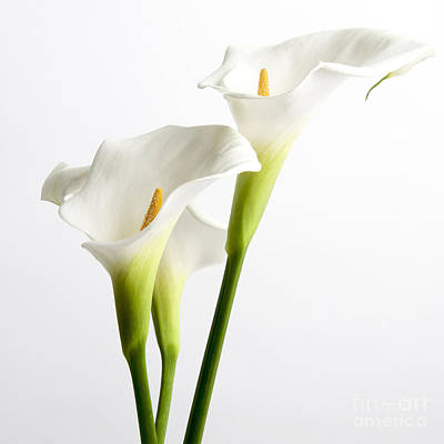 Indoor Photograph - White Arums by Bernard Jaubert