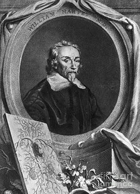 William Harvey, English Physician Print by Photo Researchers