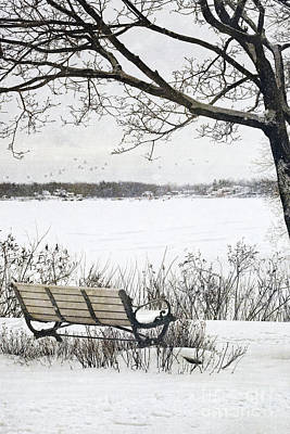 Winter Scene With With Bench And Tree Print by Sandra Cunningham
