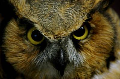 Owl Photograph - Wise Old Owl by LeeAnn McLaneGoetz McLaneGoetzStudioLLCcom