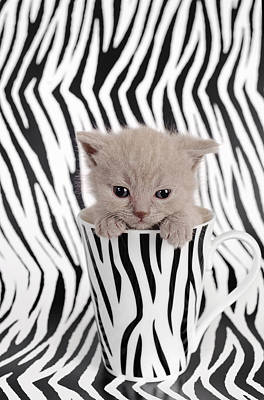 Zebra Cat Print by Waldek Dabrowski