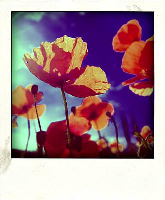 Auvergne Photograph - Field Of Poppies by Bernard Jaubert