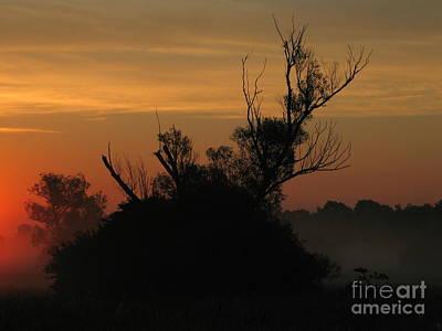 Pink Black Tree Rainbow Photograph - Sunset by Odon Czintos