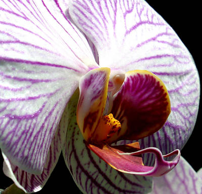 Leaf Photograph - Orchid Flower Bloom by C Ribet