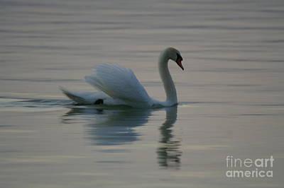 Swan Print by Odon Czintos