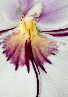 Macro Photograph - Exotic Orchid Flowers Of C Ribet by C Ribet