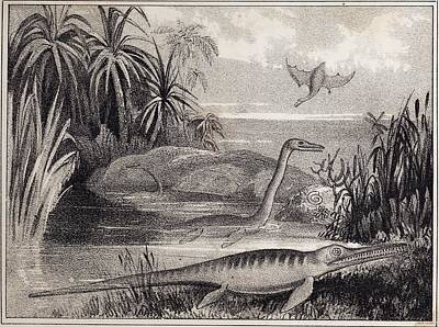 Pterodactyle Photograph - 1837 Extinct Prehistoric Animals Dorset by Paul D Stewart