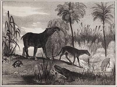 Fossil Reconstruction Photograph - 1837 Extinct Prehistoric Animals Paris by Paul D Stewart