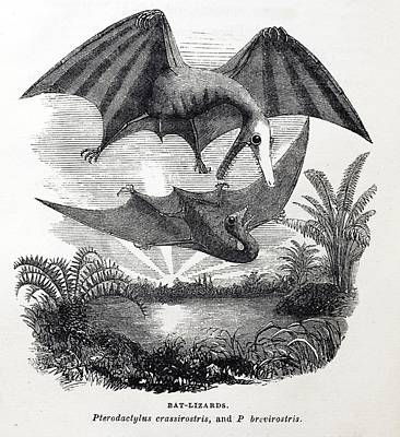 Pterodactyle Photograph - 1857 Gosse Pterodactyle Bat-lizards by Paul D Stewart