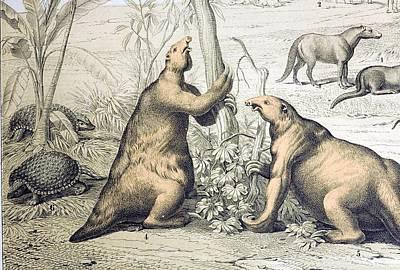 1862 Giant Ground Sloth Megatherium Print by Paul D Stewart