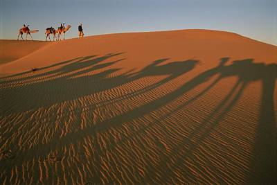 A Tuareg Tribesman Leads His Camels Print by Carsten Peter