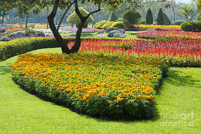 Beautiful Flowers In Park Original by Atiketta Sangasaeng