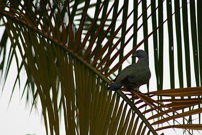 Photograph - Bird by Gonca Yengin