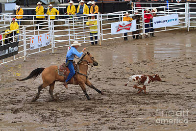 Calf Roping At The Calgary Stampede Print by Louise Heusinkveld