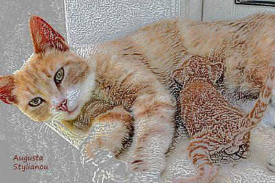 Soulful Eyes Digital Art - Cat Maternity by Augusta Stylianou