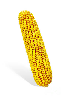 Corns Photograph - Corn Cob by Carlos Caetano