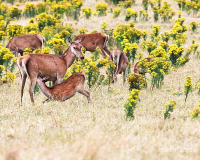 Deers Print by MotHaiBaPhoto Prints