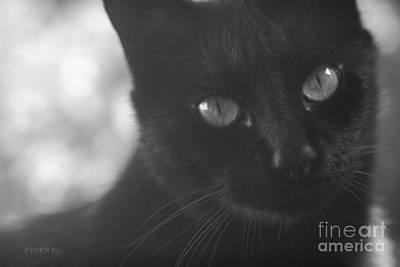Pets Art Digital Art - Dimensions Of A Heart by Sharon Mau