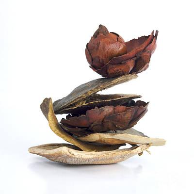 Dried Pieces Of Vegetables.  Print by Bernard Jaubert