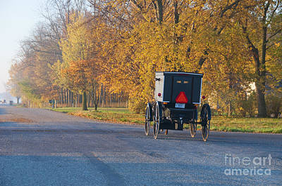 Amish Photograph - Fall Buggy by David Arment