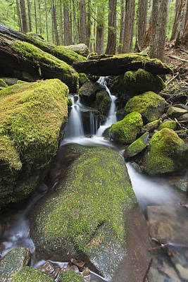 Y120907 Photograph - Forest And Stream In The Olympic Forest by Gavriel Jecan