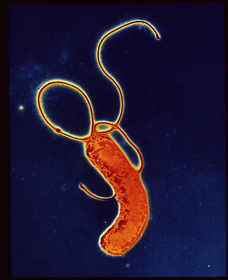 Helicobacter Pylori Bacteria Print by A.b. Dowsett