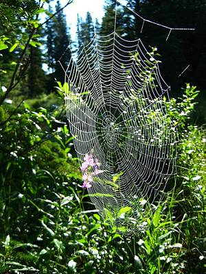 Intricate Spider Web Print by Shirley Sirois