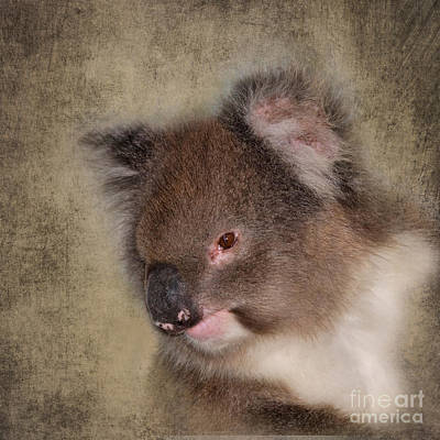 Koala Digital Art - Koala by Louise Heusinkveld