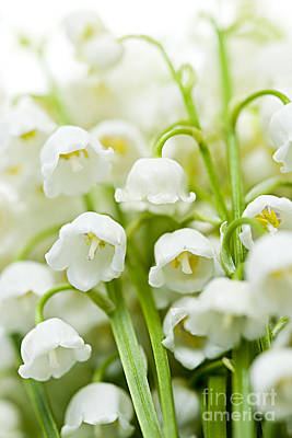 White Background Photograph - Lily-of-the-valley Flowers by Elena Elisseeva