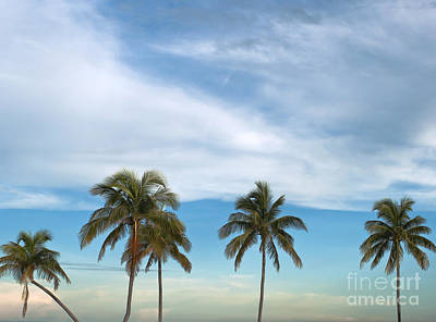Palm Trees Print by Blink Images