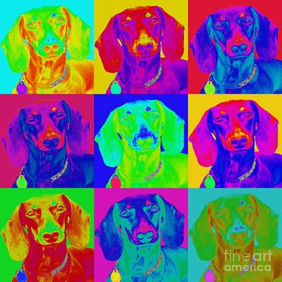 Doxies Digital Art - Pop Art Dachshund by Renae Laughner