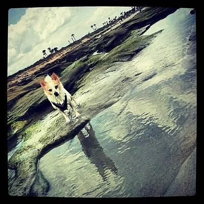 Beach Photograph - Rocko by Mandy Shupp