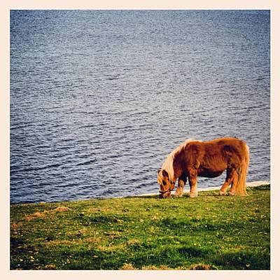 Horse Photograph - Shetland's Pony by Luisa Azzolini