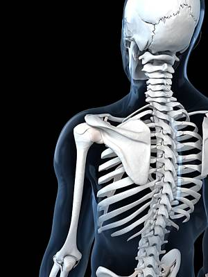 Shoulder Anatomy, Artwork Print by Sciepro