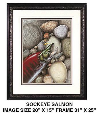 Sockeye Salmon Original by JQ Licensing