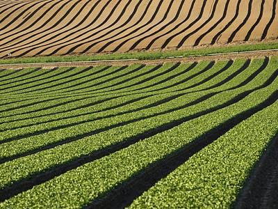 Spinach Crop Print by Adrian Bicker